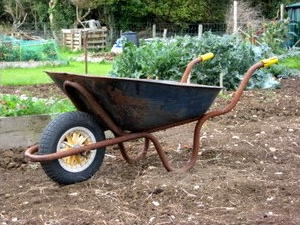Old rusty wheelbarrow on an allotment