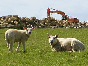 Sheep in front of a quarry equipment.